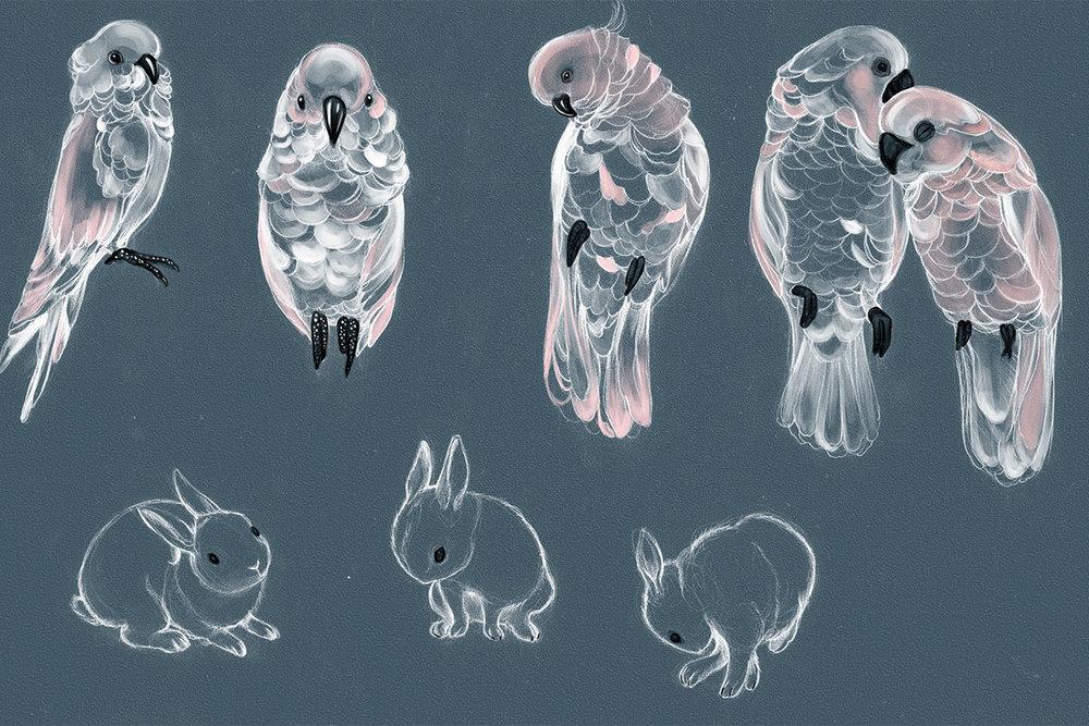 Cockatoos_bunnies_web.jpg