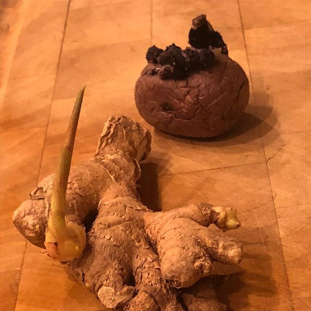So the turmeric is going so well @chefrobertwood thought he would try a couple more things - next up purple potatoes and ginger! #growyourown #nutrition #foodismedicine