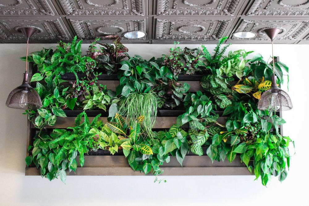 Osteria Bigolaro Plant Wall