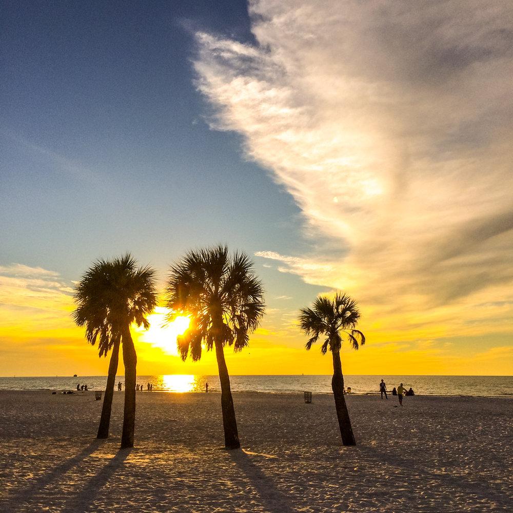 beachpalms.jpeg