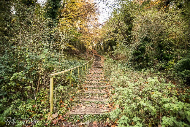 Friston Forest Walks in Brighton by Fifi McGee