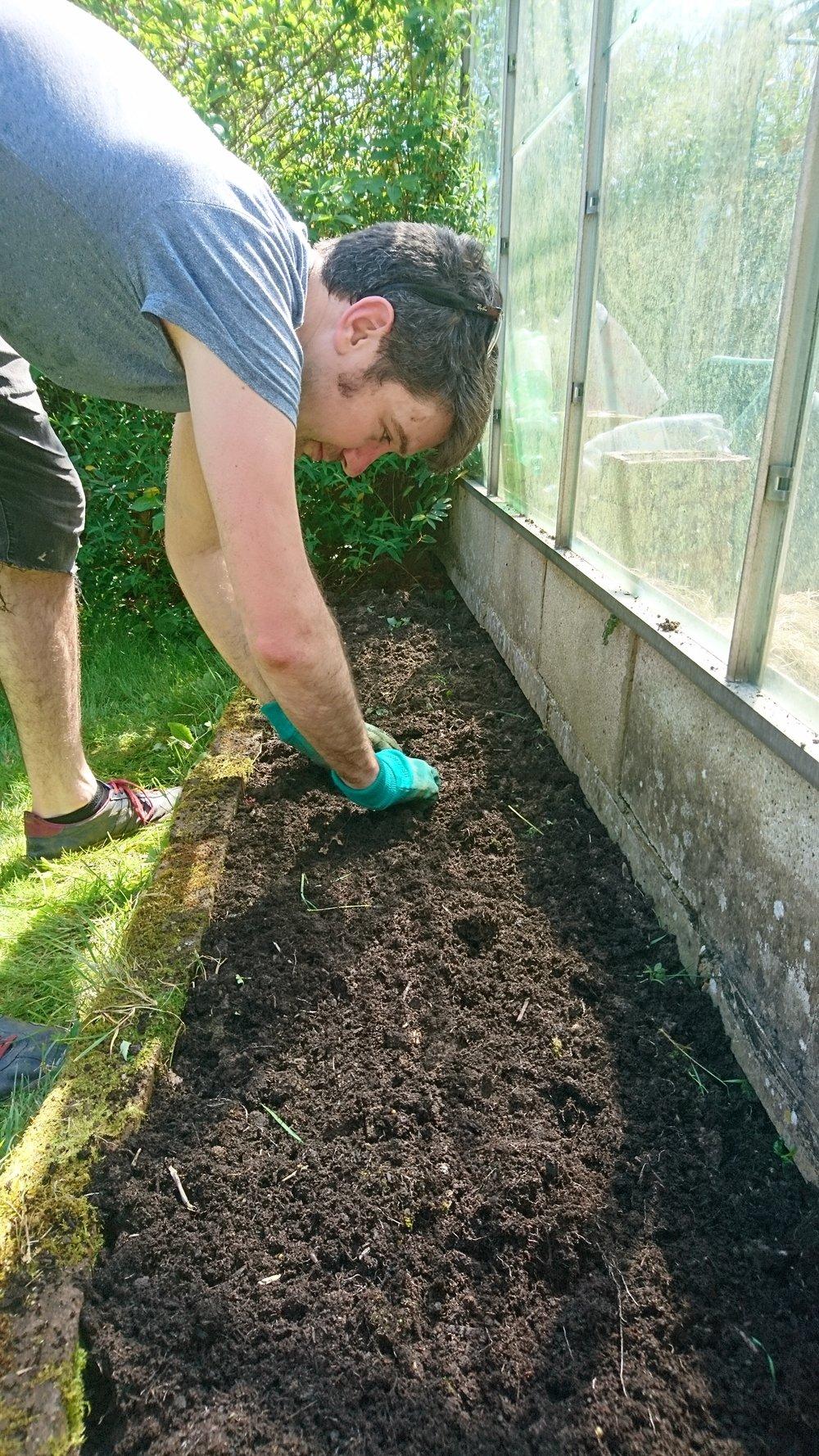 Brighton blogger gardening post