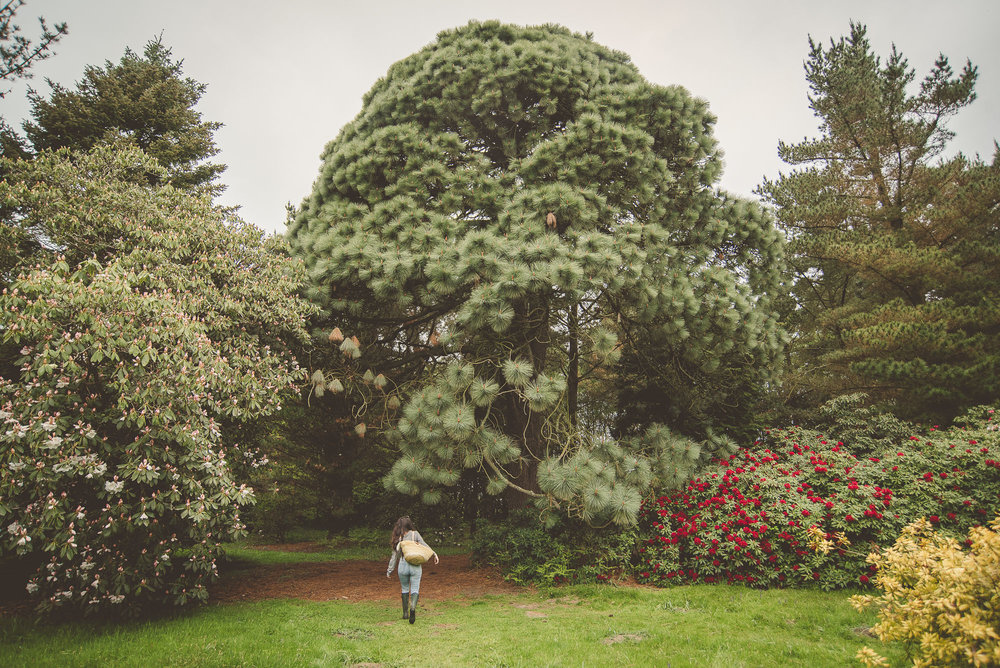 Trees at Sheffield Park and Garden, National Trust