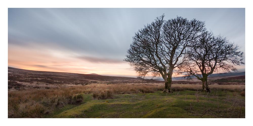 Wicklow Way trees 2.jpg