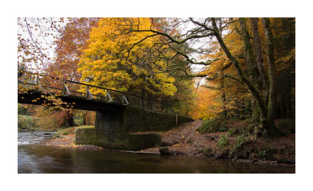 Autumn 16-2.jpg