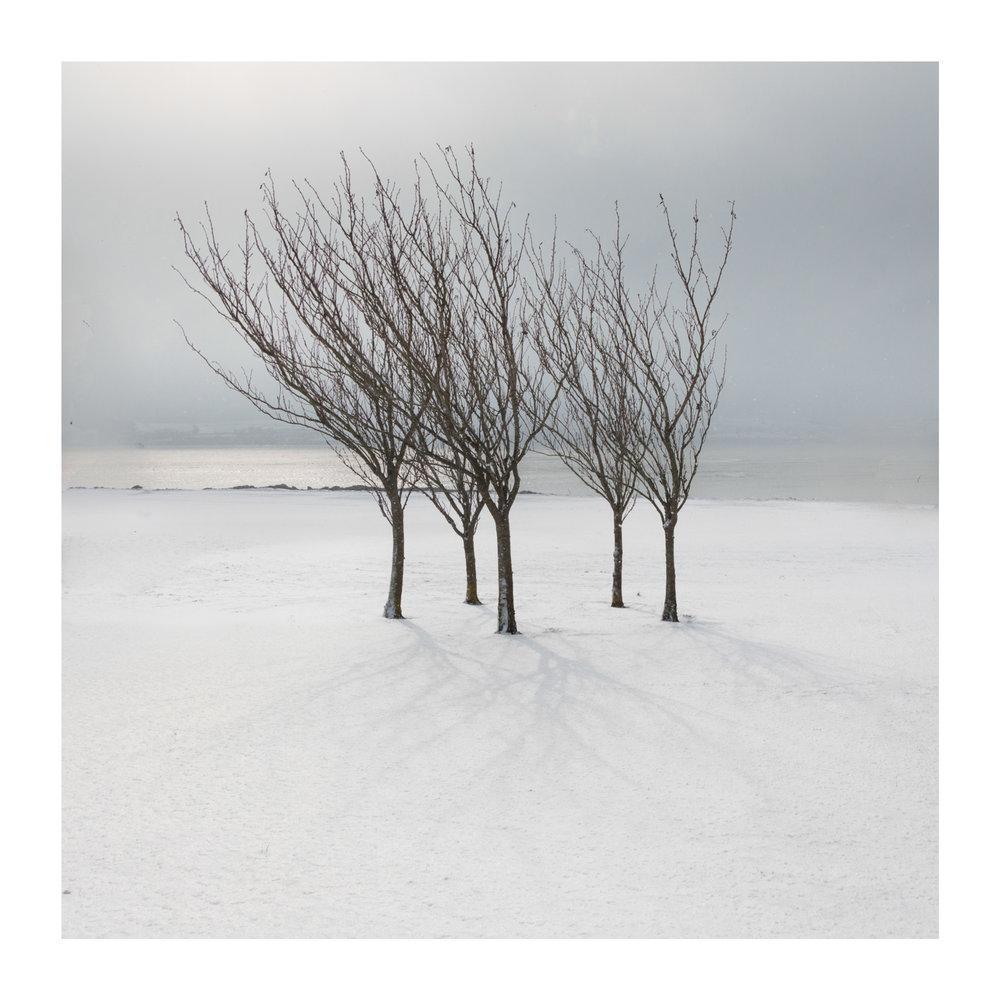 Snow day 12-2-2.jpg