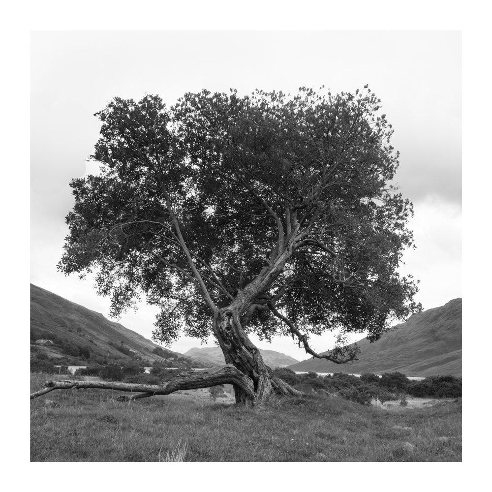 Lough na Fooey Tree 2.jpg