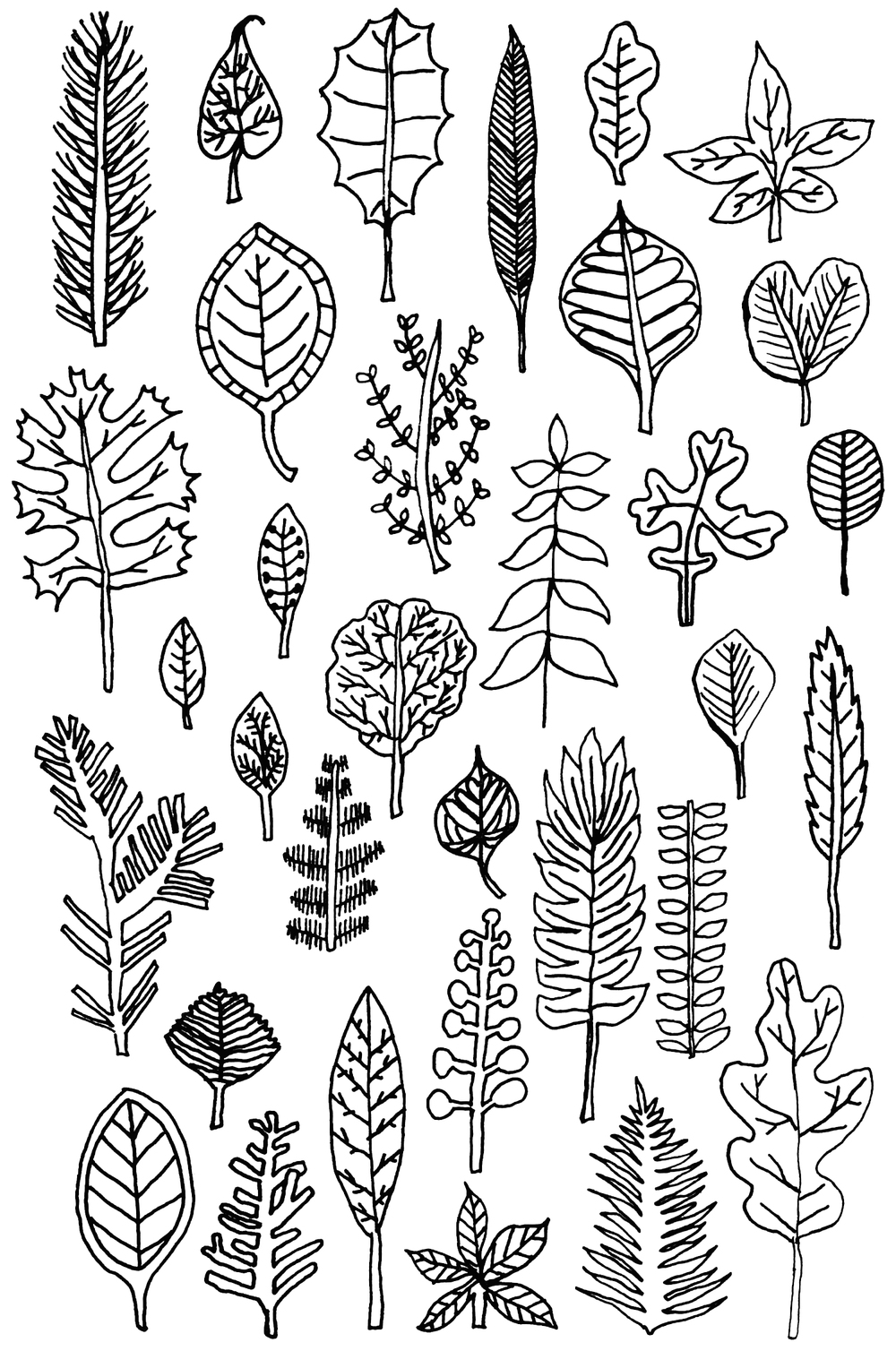 illustration leaves drawing nicole stevenson studio.jpg