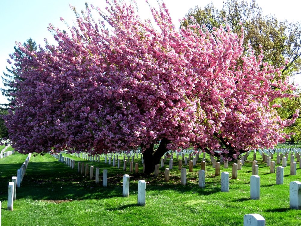 Arbor Tech-Family Tree Burial Service-blog.jpg