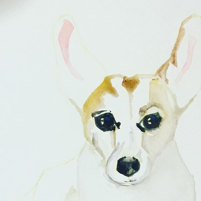 This little chap is coming up nicely 💕#petportraits #watercolour #mothersdaygift