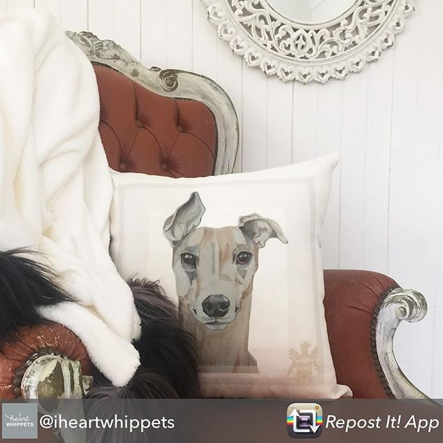 Repost from @iheartwhippets using @RepostRegramApp - Who wants this stunning @hellomorganreid Sighthound cushion cover?! More details in the upcoming auction catalogue, to follow... #sighthound #greyhound #whippet #lurcher #galgo #charityauction #dogcushion #dogdesign #dogportrait #dogart #doginterior #whippetsofinstagram #greyhoundsofinstagram #adopt #rescue #sighthoundart #instawhippet #whippetlife #tw