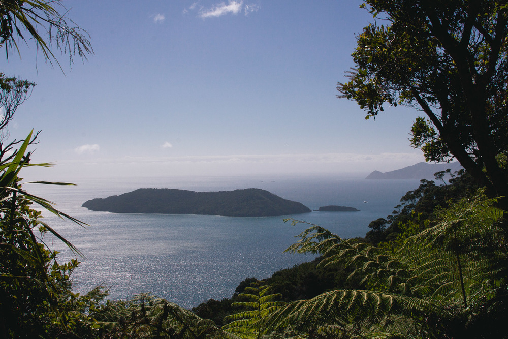 View of Motuara Island from saddle lookout on Queen Charlotte Track/ D3.
