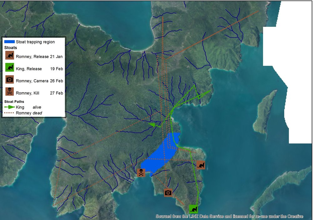 Map of movements of all stoats released on Bottle Rock as at 23 March 2016. As you can see, 'Romney' passed through the virtual barrier at least four times before being caught!