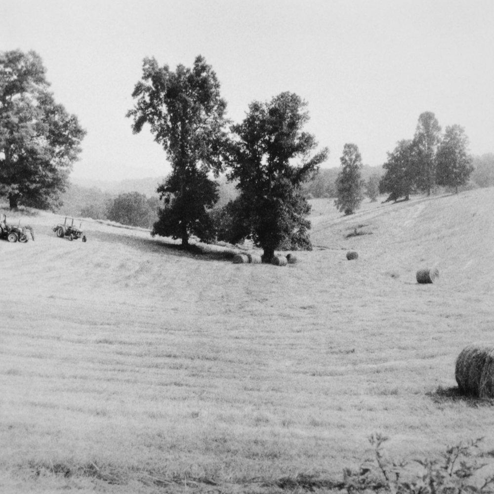 asheville-wheatfield.jpg