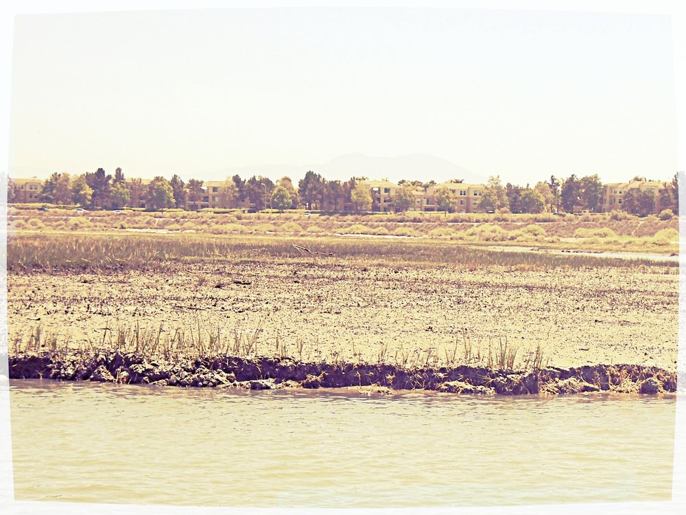 Mudflats in Upper Newport Bay, Orange County.