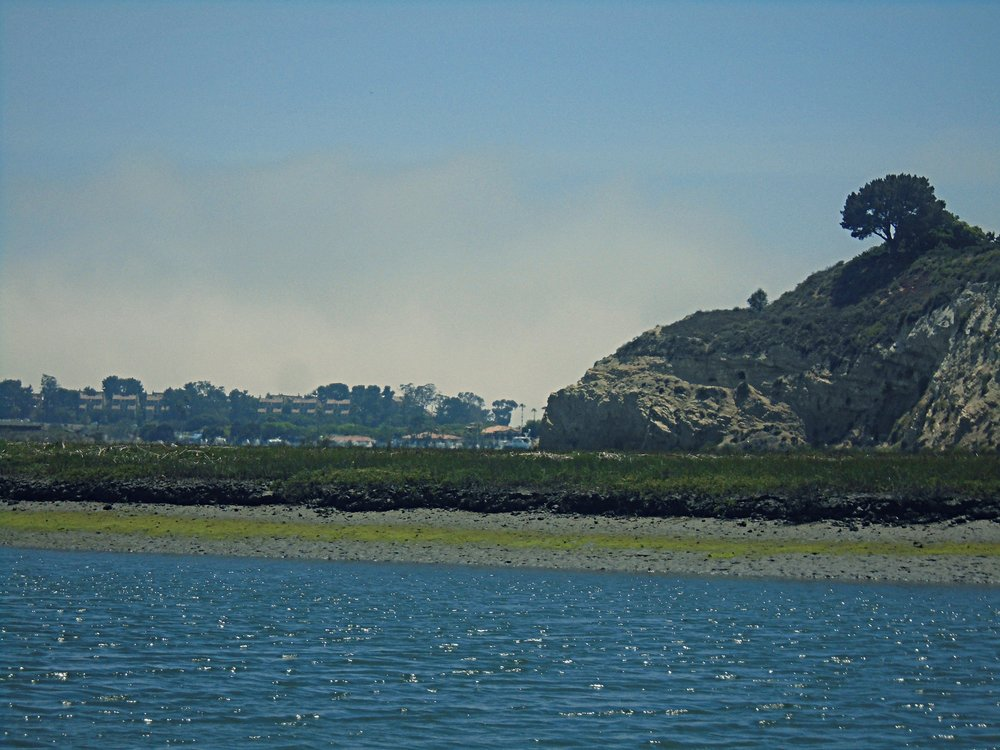 Photo of mudflat and marsh in Upper Newport Bay.