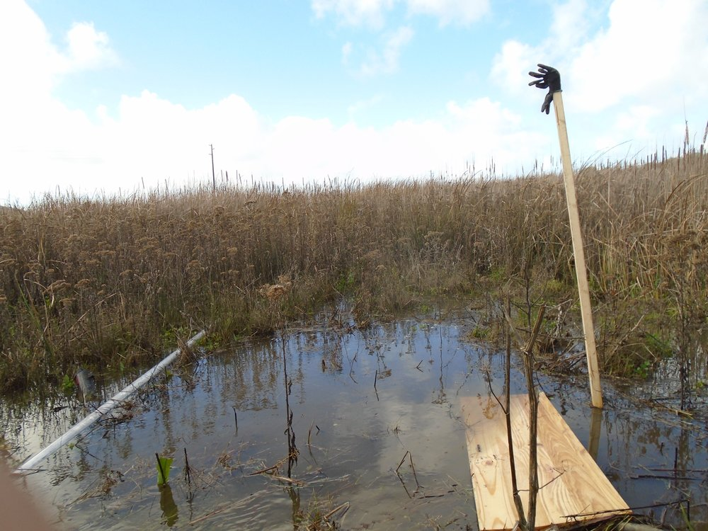 Winter rains result in a flooded marsh even at low tide adding a new challenge to fieldwork!