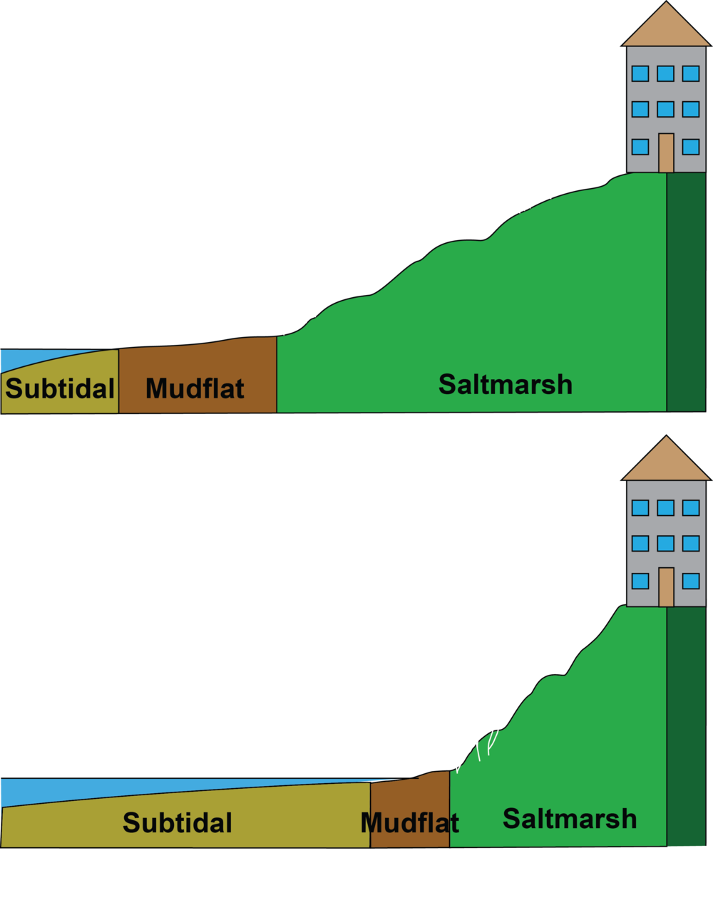 Top: Initial conditions in the wetland.  Below: Habitats decrease as sea level rises.