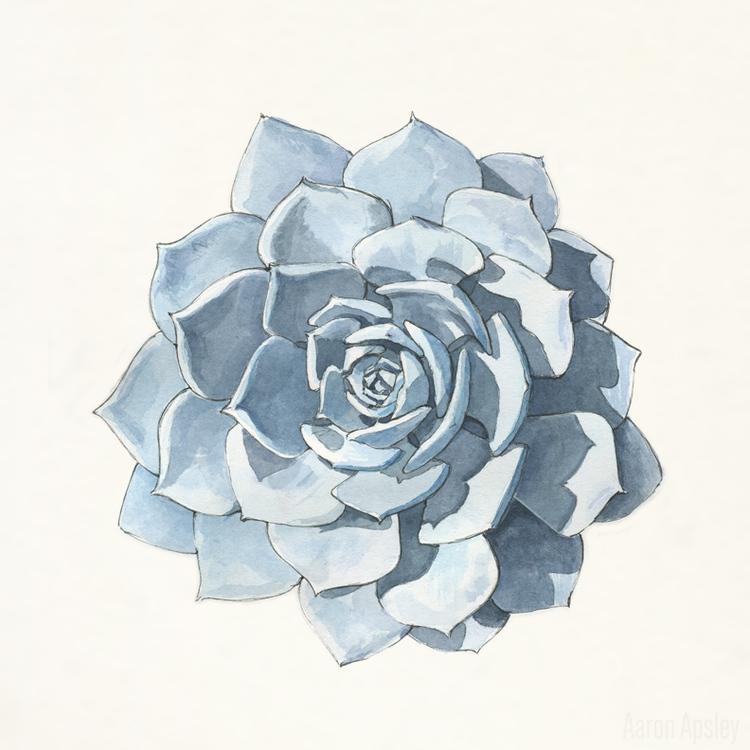 Echeveria+Lilacina+Rosette.jpg