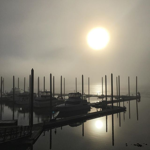 The fog hung around a little longer than usual this morning.  But the sun eventually won the battle and the world became a sunny place.  Could be a metaphor, but it's likely just the weather.  #willametteriver #fog #pdxnow #portlandoregon #theneighborhood