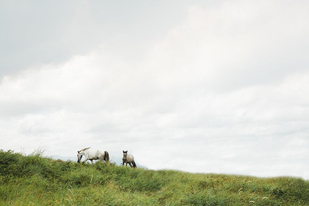 horses on mountain EDITED RESIZED.jpg
