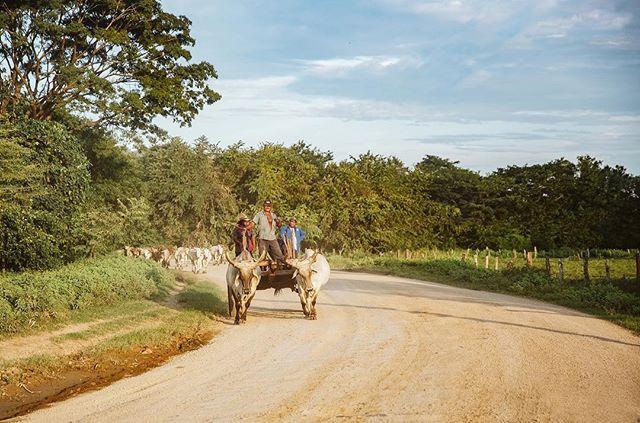 Ox carts + dirt roads. #nicalife