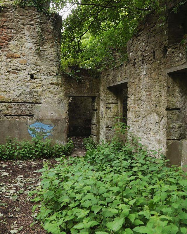 Ruins in the woods #cammoestate #cramond #edinburgh #ruins #urbanexploration #abandoned #naturetakeover