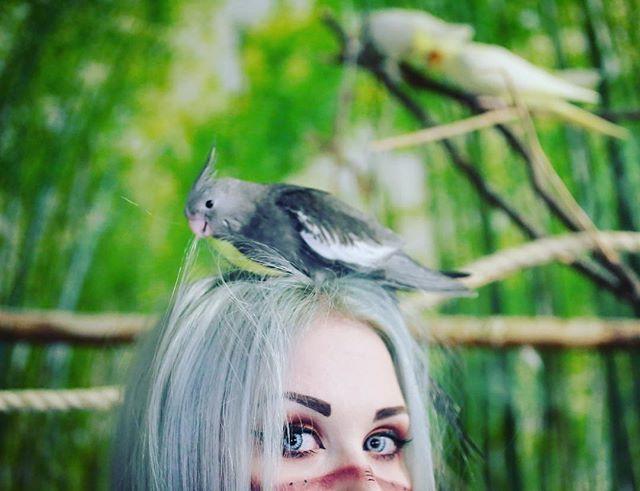 Thesis Sneaky peek #witch #liirumlaarum #birds #noita #oppari #neitinoita @blackthorn.witch @empress_nymphica #noitaoppari