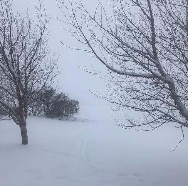 World has gone monochrome again #inconveniencepowder #snow #lahti #blackandwhite #nocolors