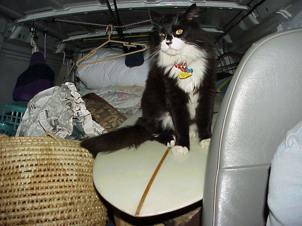 On the road to Alaska, sitting on a surfboard and next to a 12-gauge shotgun with rifled slugs. This is Ike, the Norwegian Forest Cat: Adventurer, mouser, tree-climber, spelunker, raconteur, ready for anything and down for whatever. A gift from Greg and Laura Noll and really, quite an extraordinary cat. A little bit Sylvester, a little bit Pepe le Peu. Charming rascal and a survivor. Way more than nine lives. Photo: Ben Marcus.