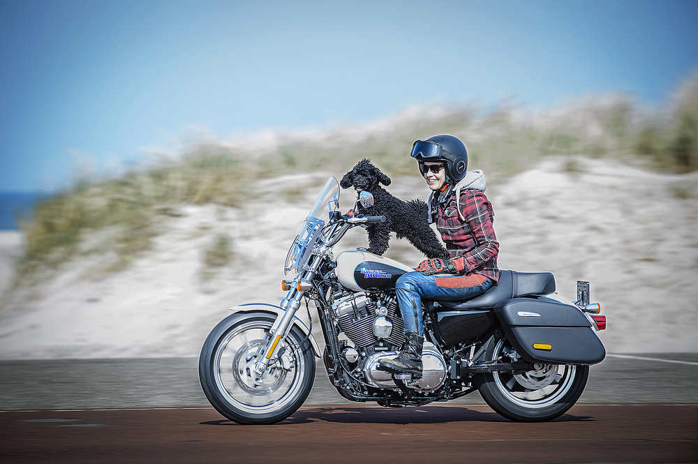 Harley_15.jpg