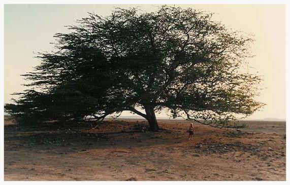 Bahrain-scenes-1.jpg