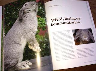 Fra Den store kaninboka