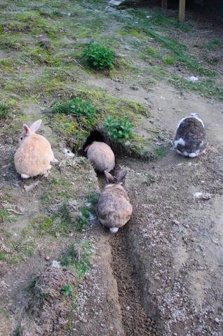 M-gjengen graver og er svært aktive ute i løpegården sin. De har gode kropper med masse muskler.  Foto: Marit Emilie Buseth