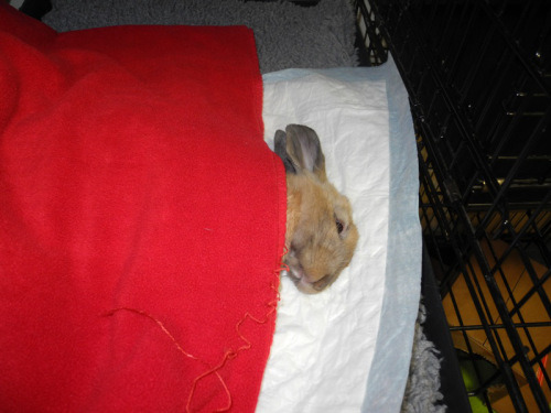 Even overvåkes og holdes varm når han våkner  Foto: M.E Buseth