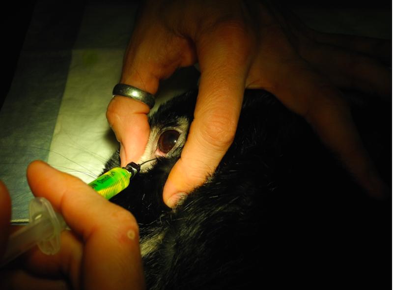 Harald har tette tårekanaler og får skylt disse. Han er våken.  Foto: Marit Emilie Buseth