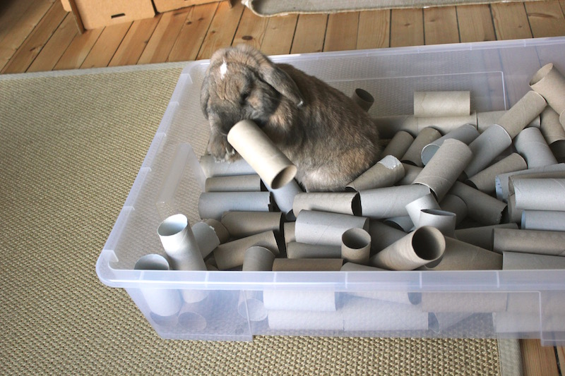 Even roter og herjer i en boks med doruller. På jakt etter urter.Foto: Marit Emilie Buseth