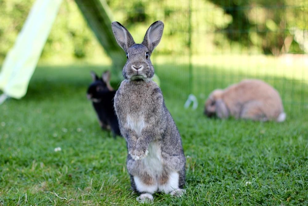 Mandel er oppmerksom og kvikk. Bak henne gresser Melis og Even.  Foto: Marit Emilie Buseth