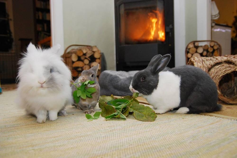 Moltas, Dinka og Helga har lever et godt kaninliv i dag.  Foto: Katarina Vallbo