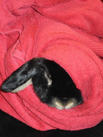 Harald i kaninburrito