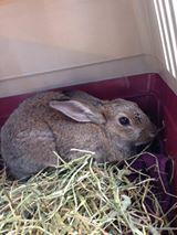 Jeg putter kaninen rett inn i reiseburet vi hadde med oss.