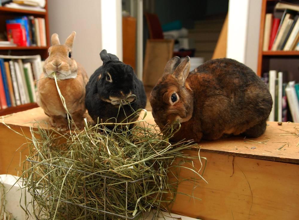Gabriel, Troja och Ru  Foto: Katarina Vallbo