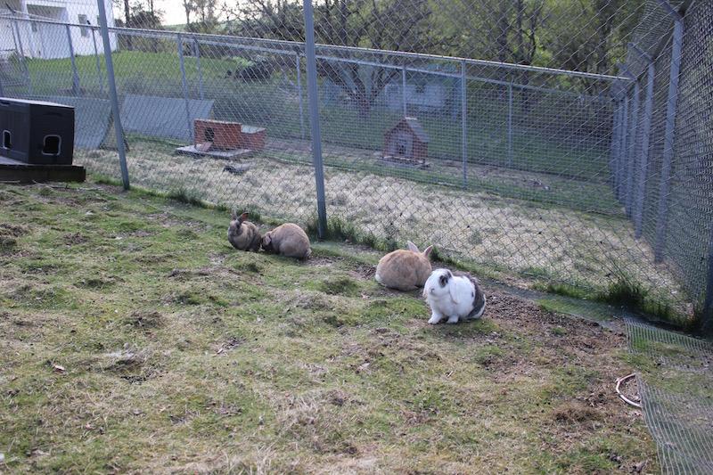 M-gjengen ute i hagen sin.   Foto: Marit Emilie Buseth