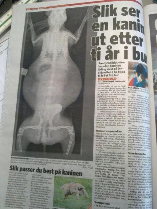 Erlings skjebne blir riksnyheter i Dagbladet