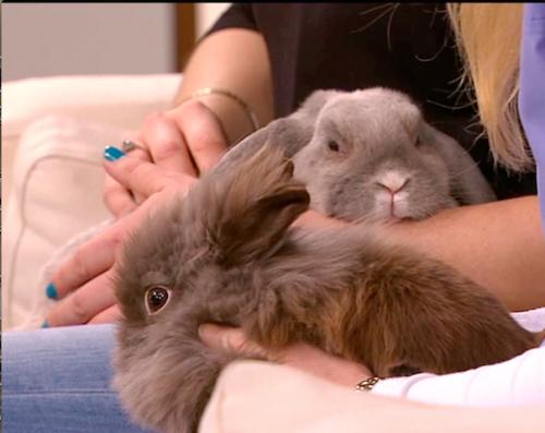 To nye kompiser debuterer som TV-stjerner