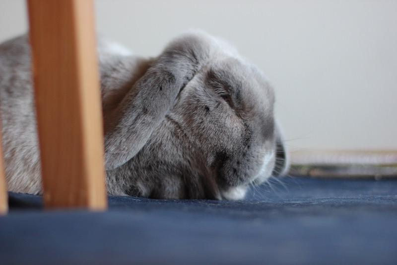 Erling koser seg og sover godt  Foto: Marit Emilie Buseth