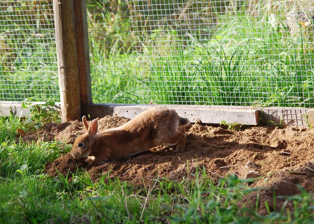 Gabriel graver og koser seg i utegården.   Foto: Katarina Vallbo