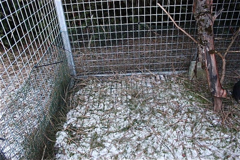 Her har man valgt å legge kompostgjerder i de utsatte hjørnene som kaninen ønsket å grave i. Foto: Marit Emilie Buseth