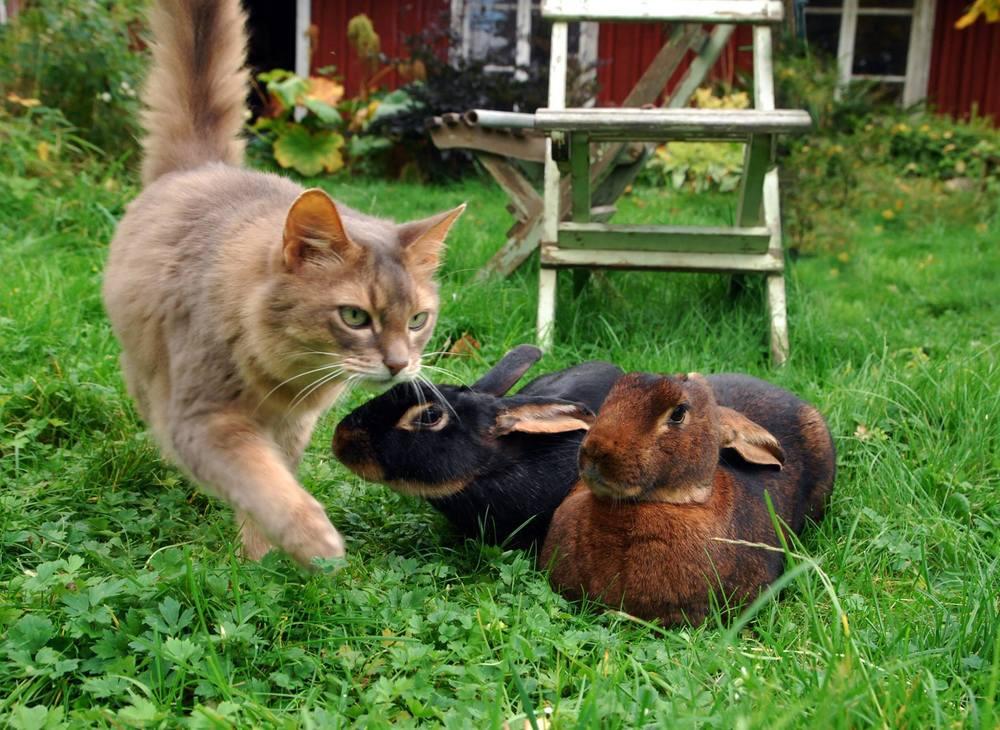 Pentii og Amos ser strengt påGaston katt som forstyrrer i siestaen. De har godtatt hverandre i flere år, men Katarina må naturligvis passe på om eventuelt fremmede katter skulle komme forbi. Foto: Katarina Vallbo
