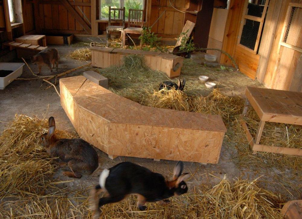 Kaniner med et fantastisk kaninhus. Her har kaninene mye å finne på. Foto: Katarina Vallbo